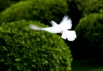 Impressions, when soft doves land. Hearing the still small voice of God.
